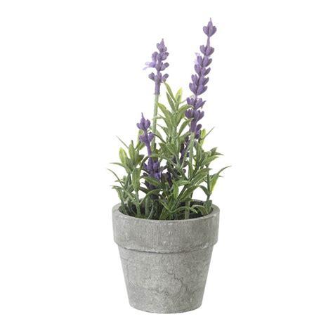 potted lavender plant decorum