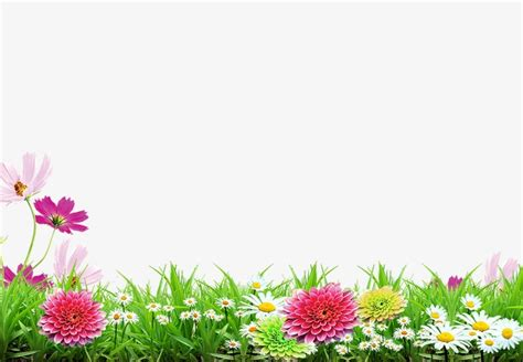 Spring Background Poster Spring Flower Grass Png And