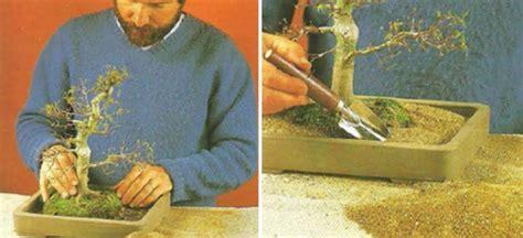 tips memilih pot tanaman bonsai bibitbungacom