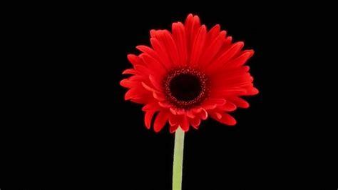 imagenes flores gif imagenes de flores hermosas awesome hermosas flores with