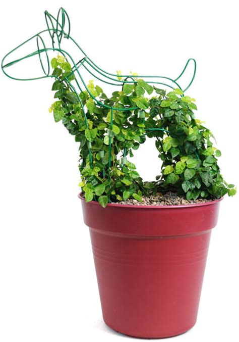 how to topiary topiary frames uk