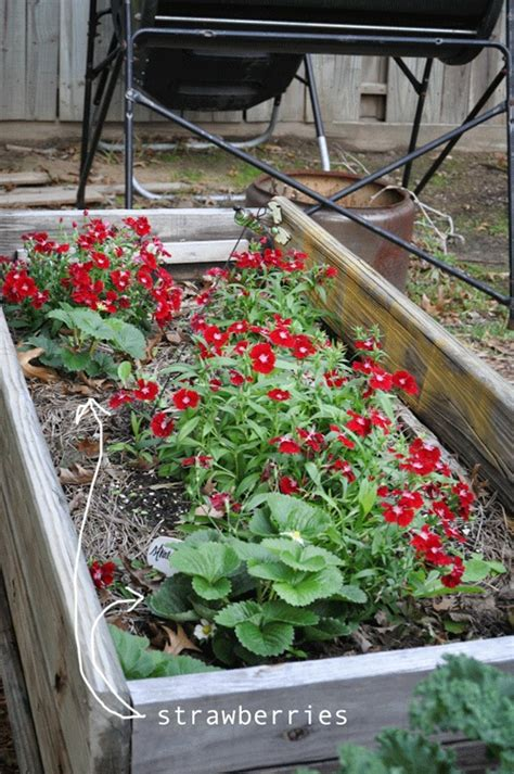 Patio Table Flower Planters by Strawberries And Flowers This Planter Box Used To Be A