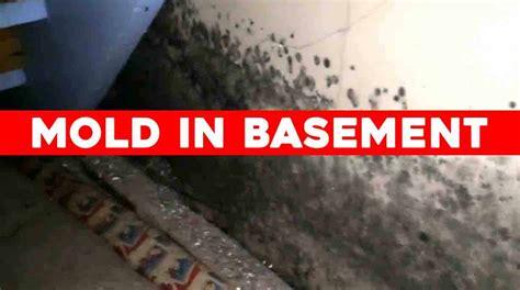 air purifier  removes mold  basement