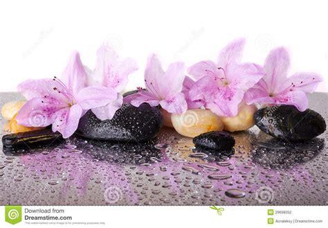 Bilder Mit Steinen Und Blumen by Rosa Blumen Und Schwarze Steine Stockfoto Bild 29698052