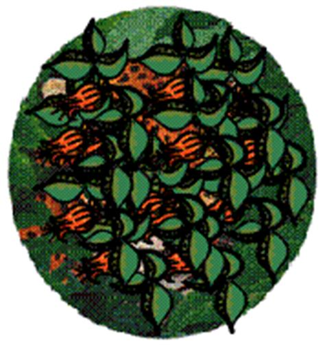 imagenes gif jaguar im 225 genes animadas de jaguares gifs de animales gt jaguares