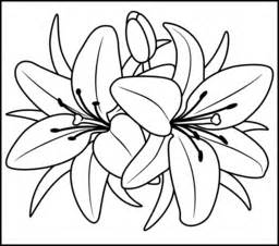 coloring pages of lily flowers collections