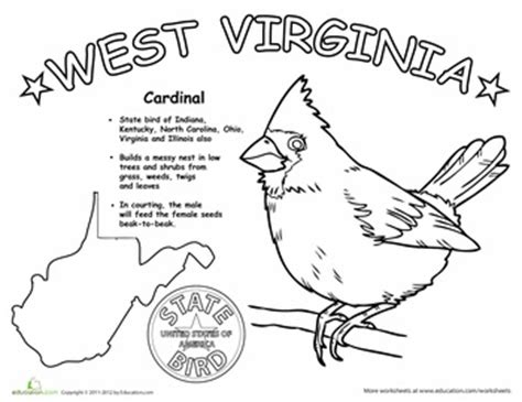 willow pattern worksheet 157 best images about state birds on pinterest virginia