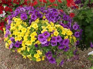 annual flowers vegetables roarks garden center