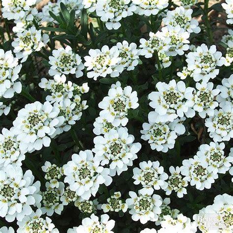 best plants for rock gardens gorgeous garden plants
