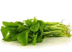 growing turnip greens how to grow fresh produce from