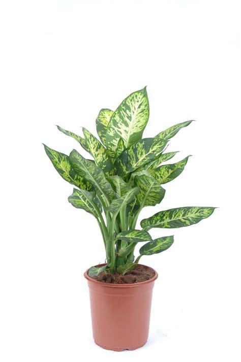 Plante Verte Intérieur by Plante D Int 233 Rieur Laquelle Choisir Quand On N A Pas La