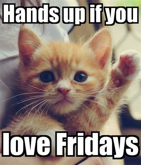 Friday Cat Meme - best 25 happy friday meme ideas on pinterest happy