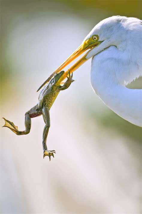 imagenes de animales autotrofos heter 243 trofos ciencias 1 201 nfasis en biolog 237 a