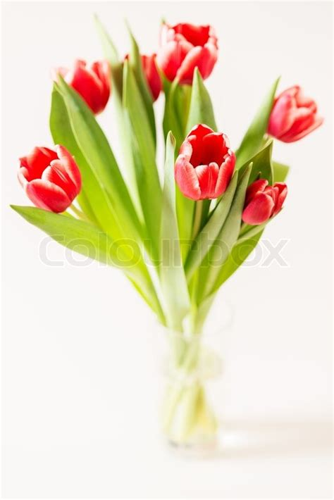 tulpen im glas tulpen strauss in glas stockfoto colourbox