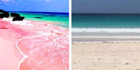beaches with pink sand pink sand beaches bahamas really pink insider
