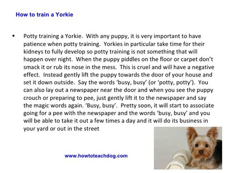 are yorkies easy to potty how to a yorkie 4 easy tips to a puppy