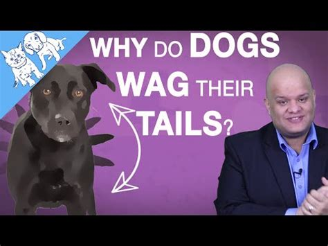 a wagging means the is happy how to make dogs bark more wag top richardson top