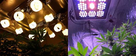 led lights for weed which led grow lights are best for growing cannabis