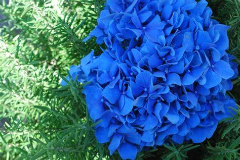 Garten Gestalten Hortensien by Passende Hortensien Pflege F 252 R Wesentlich Mehr Bl 252 Ten
