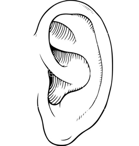 printable ear images image gallery ear outline