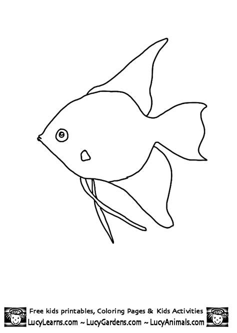 angel fish coloring pages printable fish template angel fish coloring page lucy learns