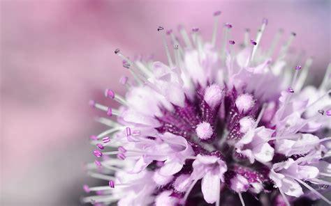 hyazinthen nach der blüte die 65 besten lila blumen sch 246 ne hintergrundbilder