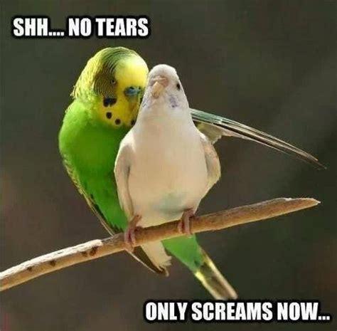 Bird Meme - bird rape meme by ashahos memedroid