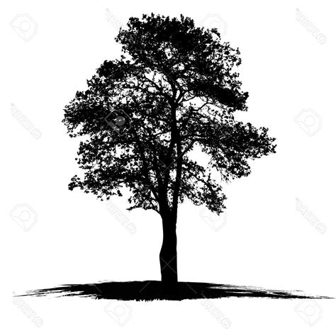 simple oak tree silhouettes www pixshark com images