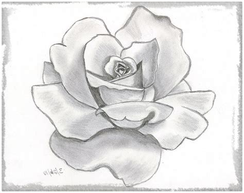 imagenes con lapiz rosas dibujadas con lapiz para alegrar dibujos de amor a