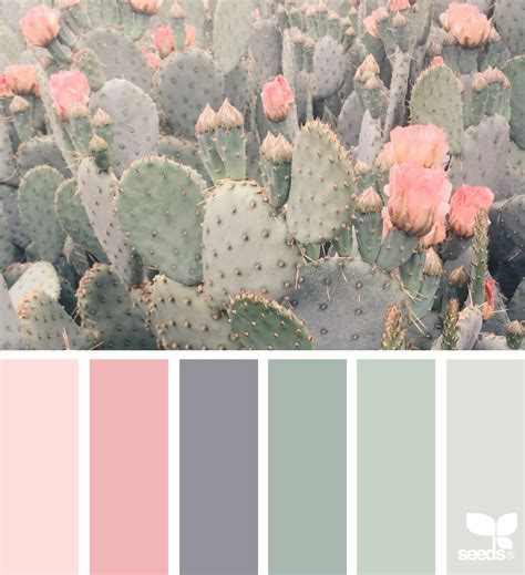 color scheme from image cacti color for the home color schemes house colors