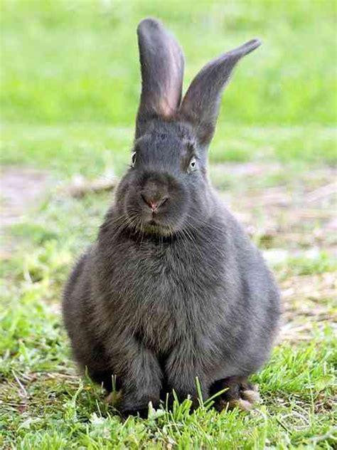 come costruire una gabbia per conigli fai da te come costruire una gabbia per conigli donnad