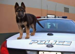 k9 puppy day on the aminals