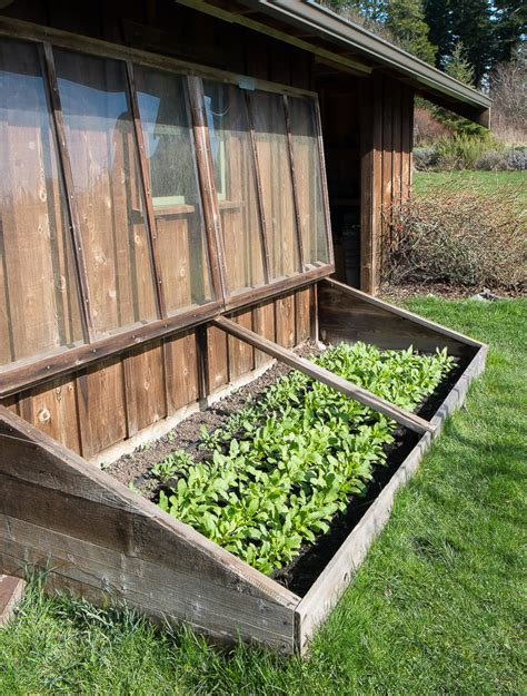 Cold Frame Gardening by An Fashioned Cold Frame Island Kitchen Gardens