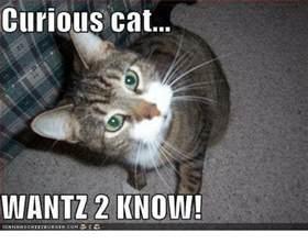 Curious Meme - 25 best memes about curious cat curious cat memes