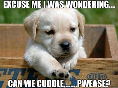 Cuddle Meme - cuddle memes quickmeme