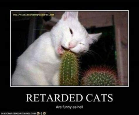 Stupid Cat Meme - stupid cats motivational posters and funny pictures