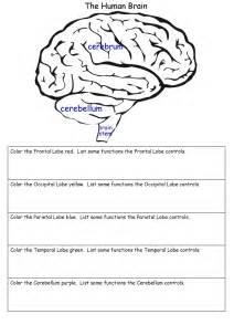 brain worksheet cc week 5 pinterest