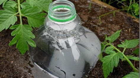 diy plant watering bottle repurpose a plastic bottle into a diy irrigation system