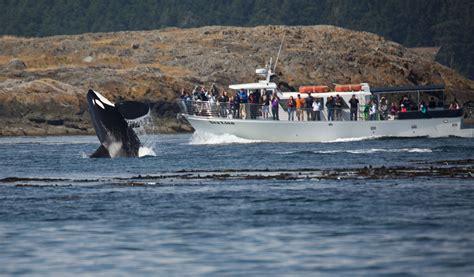 seattle whale watching boat tours san juan island whale watching day trip from seattle wa