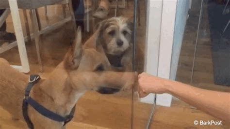 puppies gif dogs puppy gif by the barkpost find on giphy