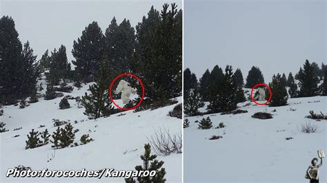 Is This The Real is this finally proof that the yeti is real