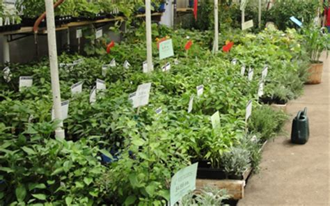 vegetable gardening in colorado garden shop denver vegetable garden supplies vegetables