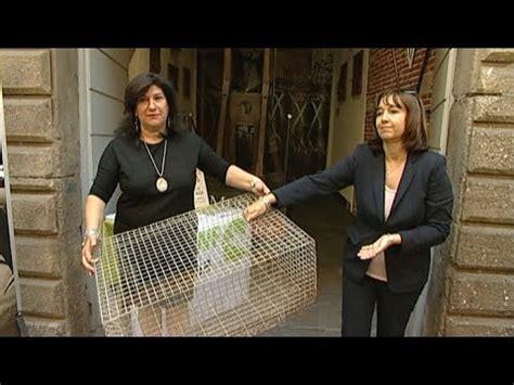 come costruire una gabbia per conigli nani una gabbia per conigli al museo della tortura
