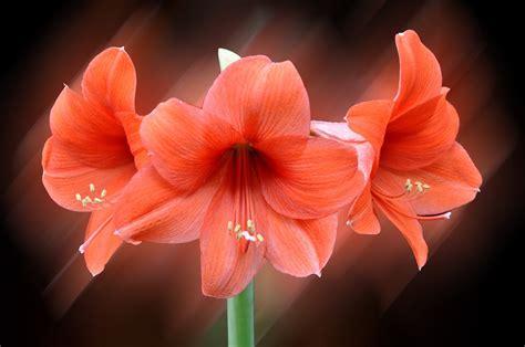 imagenes flores bellas gratis banco de im 193 genes las flores m 225 s hermosas del mundo 18