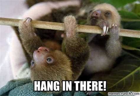 Hang In There Meme - just need to vent long thenest
