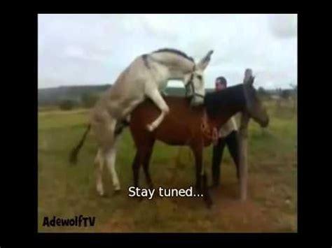 crazy horse mates cow full download animal mate himar fok himar donkey animals
