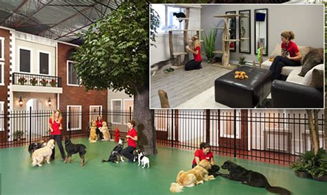home grand pet hotelgrand pet hotel jet pet resort recognized as most luxurious pet hotel in world