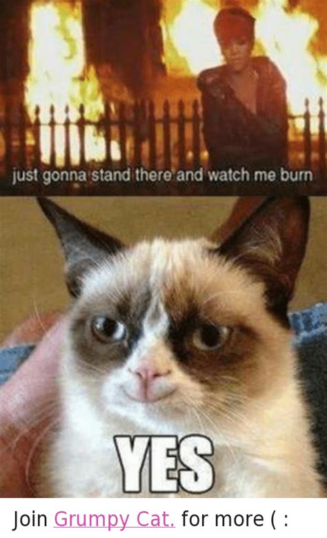 Grumpy Cat Yes Meme - 25 best memes about grumpy cat and watch me grumpy cat