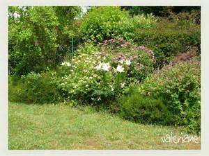 le jardin en juin les lys le de val 233 riane