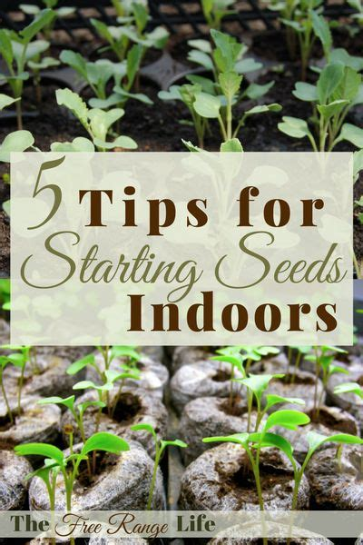 5 tips for starting seeds indoors gardens vegetable